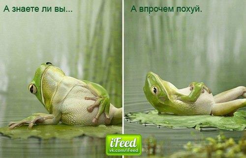 http://lomov.net/images/poh.jpg